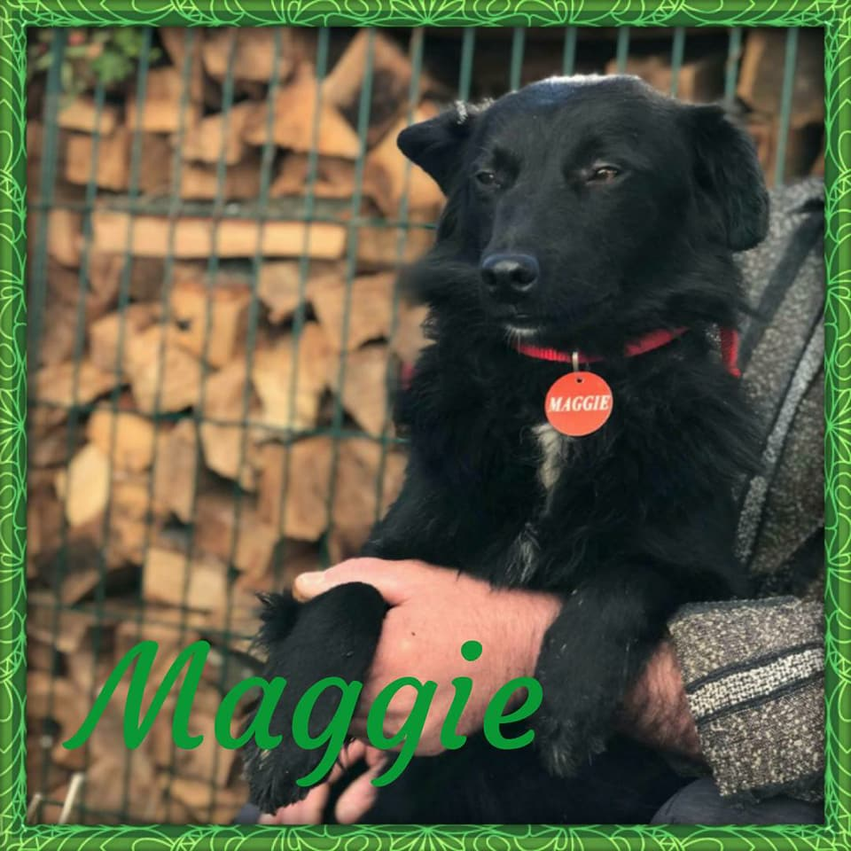 maggie 2